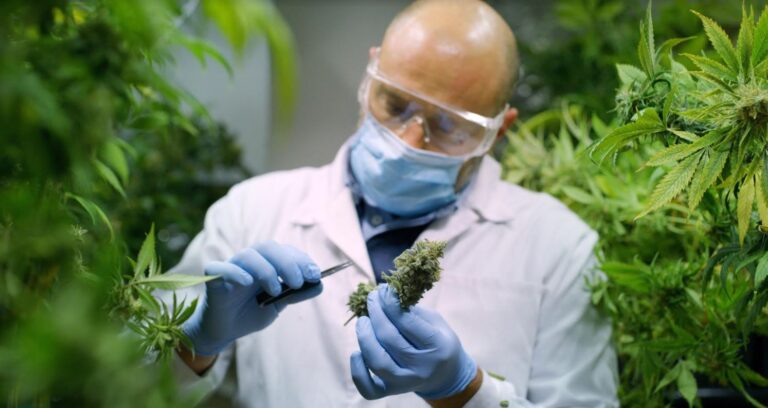 So, You Want to Work in the Medical Marijuana Industry?